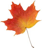 Now, this maple leaf must be separated from it's background and then ...