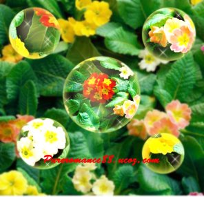Create Beautiful Flowers Captured in a Bubble