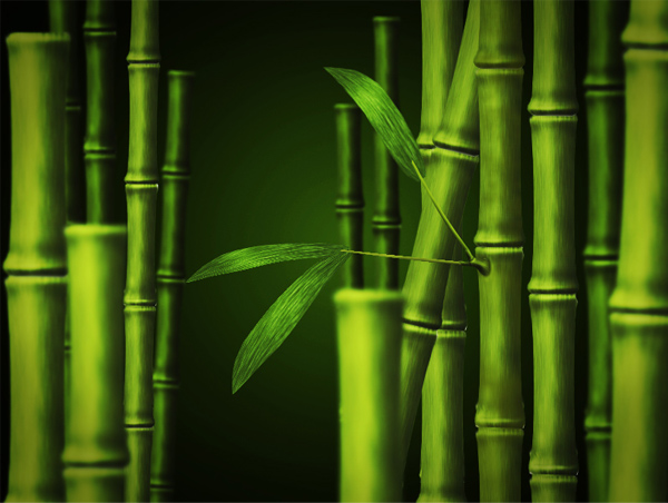 Create Bamboo in Adobe Photoshop