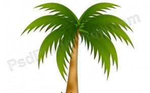 How to Create Palm Tree Vector in Photoshop