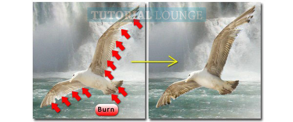Burn Tool to darken the wings and tail