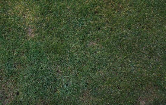 grass at night texture. Delighful Texture Grass Texture Free Textures In At Night Texture M