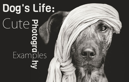 Dog's Life: Cute Photography Examples
