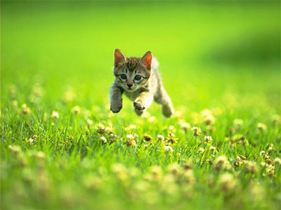 На минное поле заманили беззащитных, как котят, чехов. www.proza.ru.