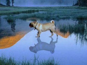 Water-walking Dog With Reflection (Exclusive Tutorial)